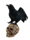 "6"" Crow Looking Up on Skull buy now"