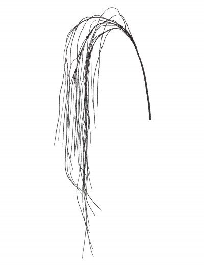 69 Inch Black Weeping Willow Spray buy now