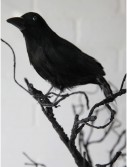 "8.5"" Glittered Crow buy now"