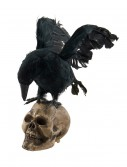 Crow Looking Down on Skull Decoration buy now