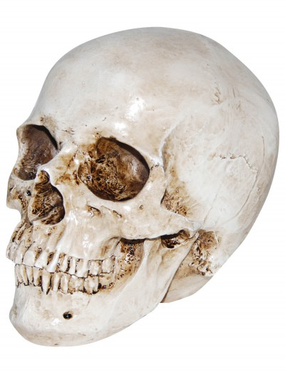Deluxe Realistic Skull Prop buy now