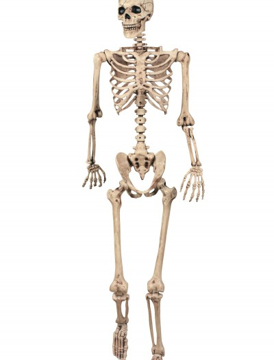 Lifesize Poseable Skeleton buy now