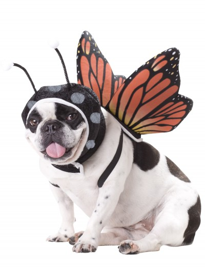Pet Butterfly Costume buy now