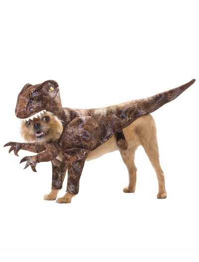 Pet Raptor Costume buy now