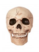 Skull with Movable Jaw buy now