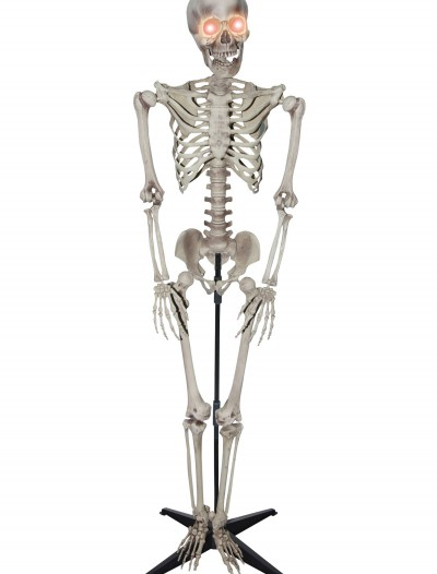 5 Foot Skeleton buy now